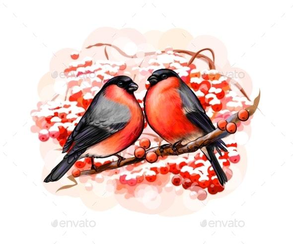 Pair of Winter Birds Bullfinches - Animals Characters