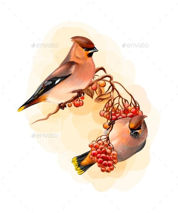 Pair of Winter Birds Waxwing Bird - Animals Characters