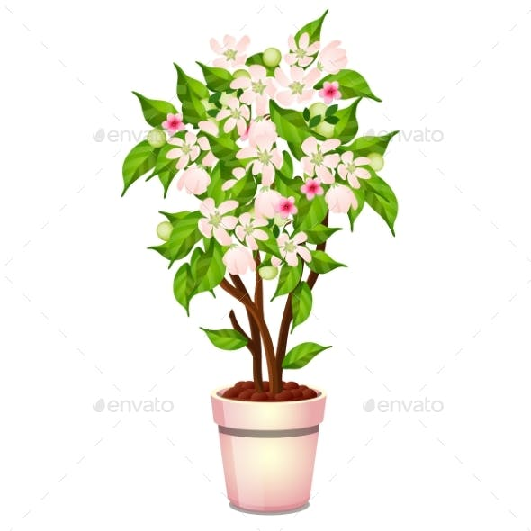 Office Potted Flowering Tree Isolated on White