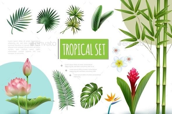 Realistic Tropical Plants Collection - Flowers & Plants Nature