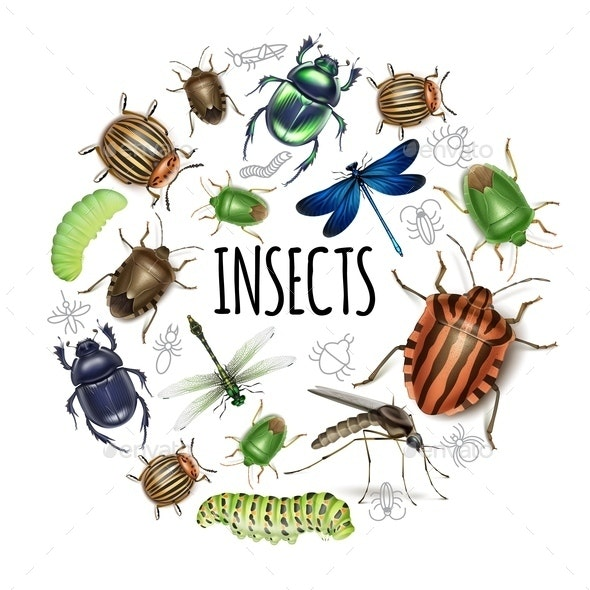 Realistic Insects Round Concept - Animals Characters