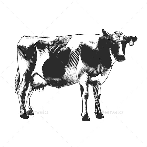 Hand Drawn Sketch of Cow - Animals Characters