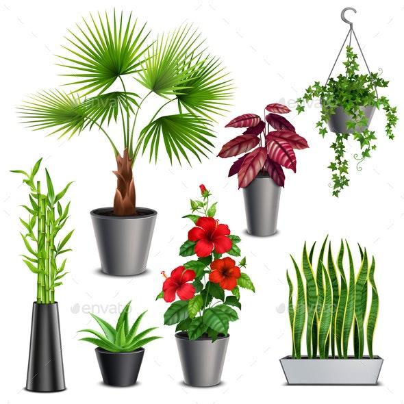House Plants Realistic Set - Flowers & Plants Nature
