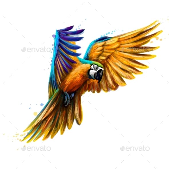 Portrait Blue and Yellow Macaw in Flight
