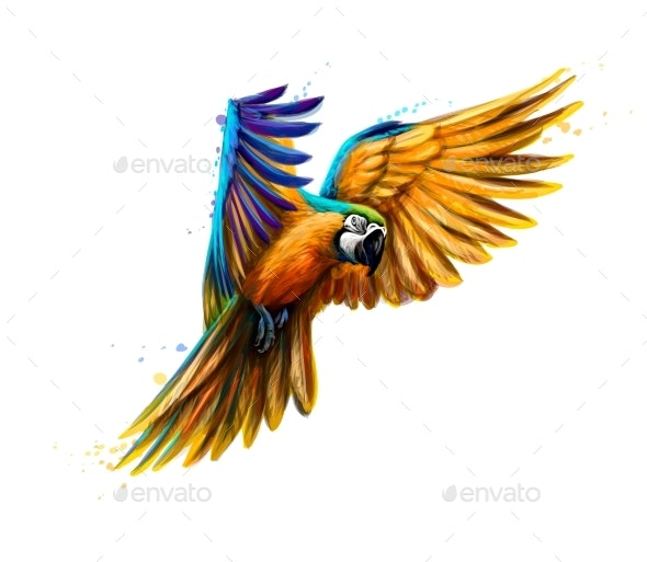 Portrait Blue and Yellow Macaw in Flight - Animals Characters