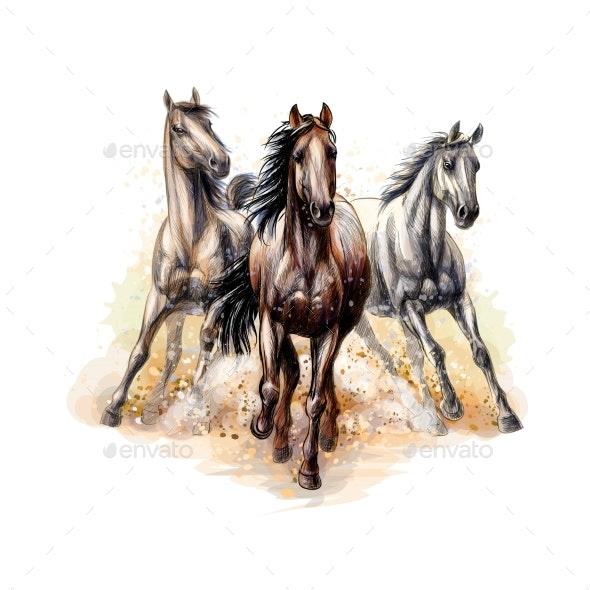 Three Horses Run Gallop - Animals Characters