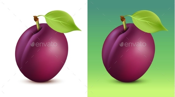 Plum Vector Illustration on White and Green - Food Objects