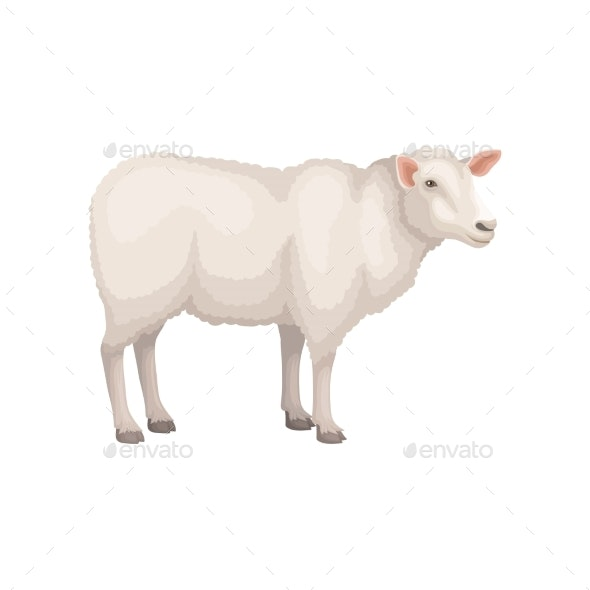 Flat Vector Icon of Young White Sheep - Animals Characters
