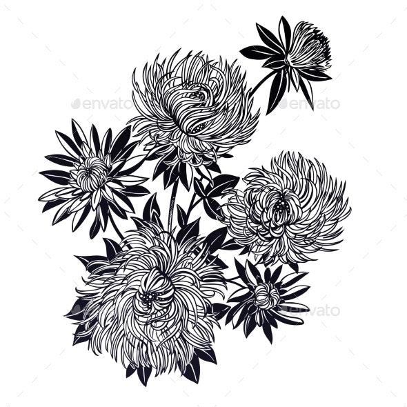 Blossoming Chrysanthemum or Aster Flower - Flowers & Plants Nature