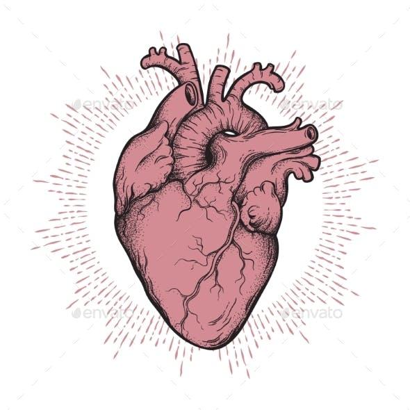 Human Heart Line Art and Dotwork