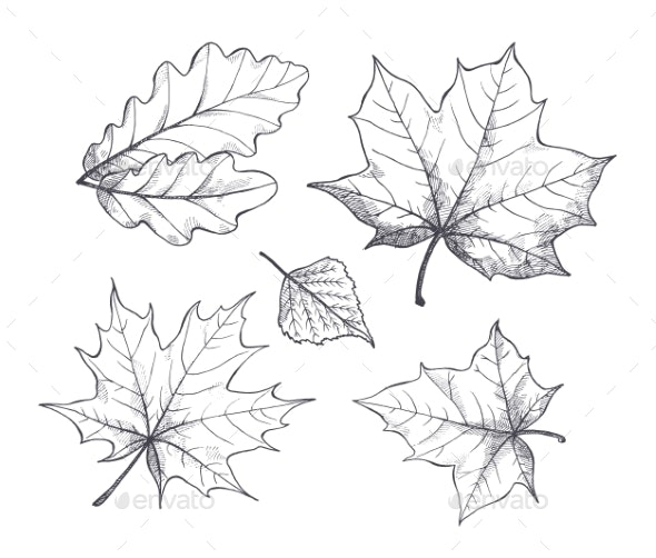Fall Autumn Season Leaves Sketch Outline Vector - Flowers & Plants Nature