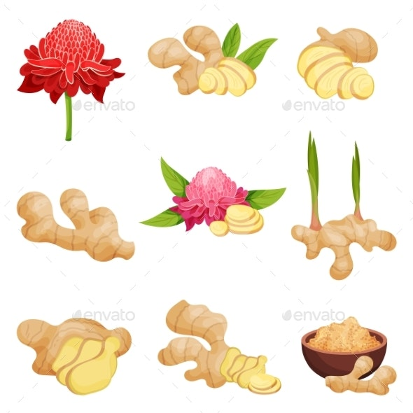 Flat Vector Set of Ginger Icons - Food Objects