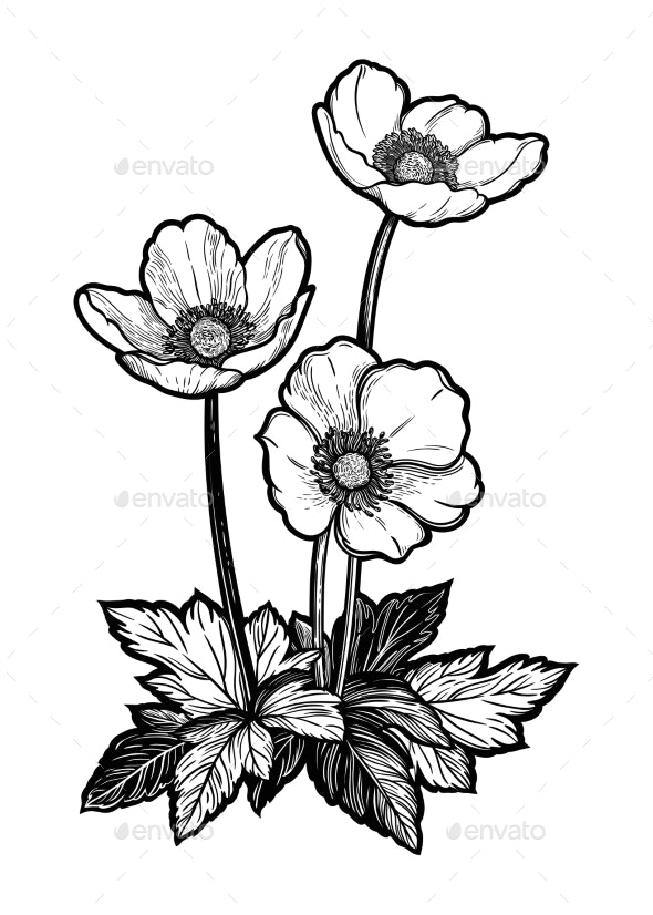 Flowers Isolated Vintage Style Vector - Flowers & Plants Nature