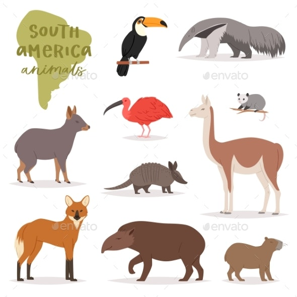 Animals in South America - Animals Characters