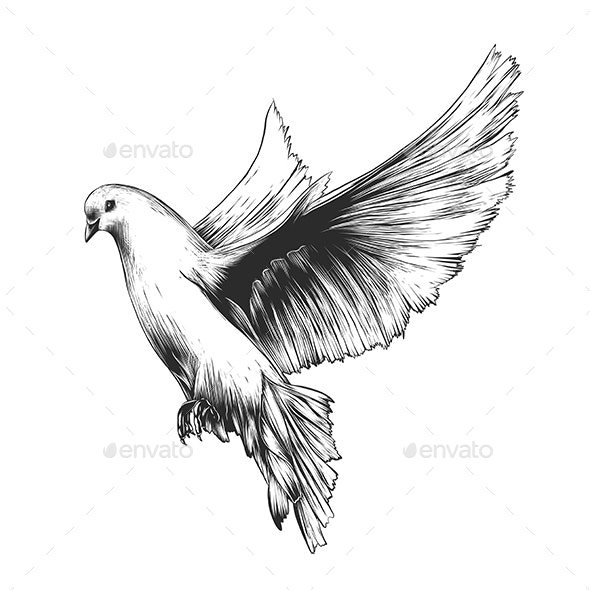 White Dove In Monochrome Isolated - Animals Characters
