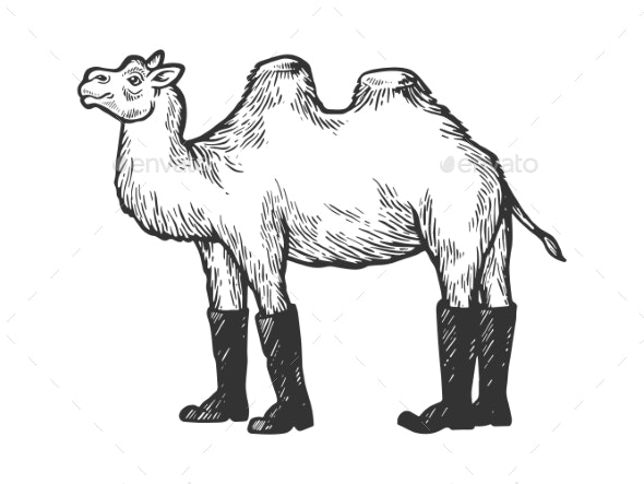 Camel Animal in High Boots Engraving Vector - Food Objects