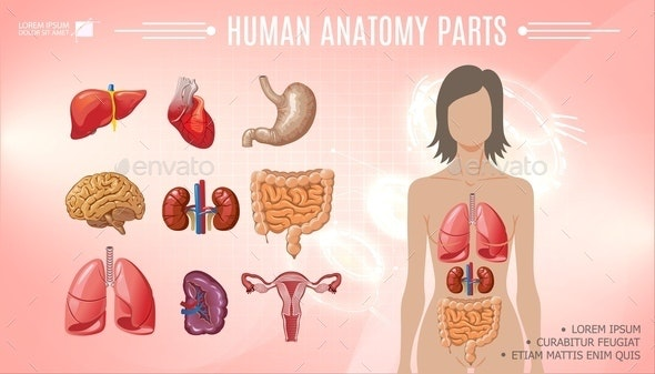 Cartoon Human Anatomy Bright Template - People Characters