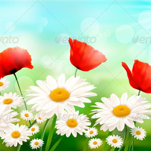 Spring Background with Red Poppy and Daisy