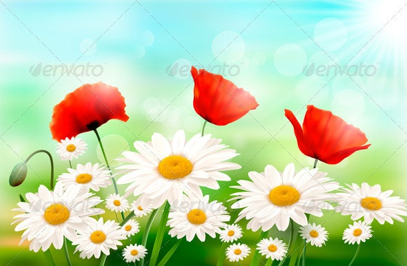 Spring Background with Red Poppy and Daisy - Flowers & Plants Nature