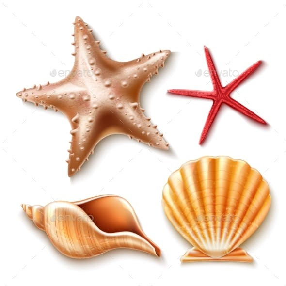 Vector Realistic 3d Sea Shell, Starfish Set
