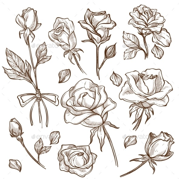 Rose Flower Bud and Stem Petals Isolated Sketches - Flowers & Plants Nature
