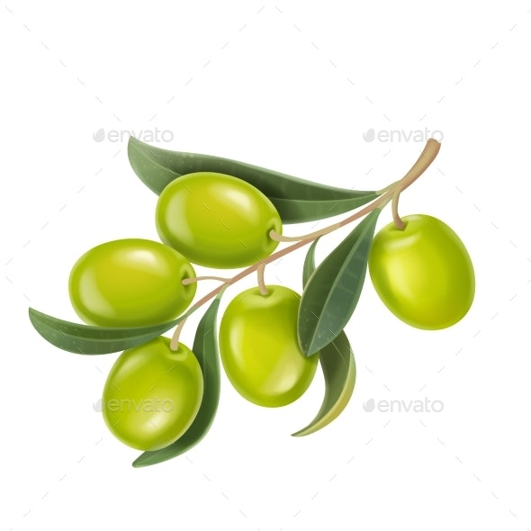 Vector Realistic Illustration Green Olives Branch - Food Objects
