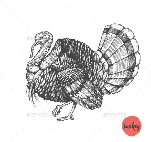 Turkey Hand Drawn Illustration - Food Objects