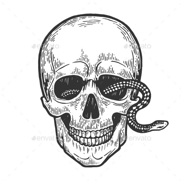 Snake in Human Skull Vector Illustration