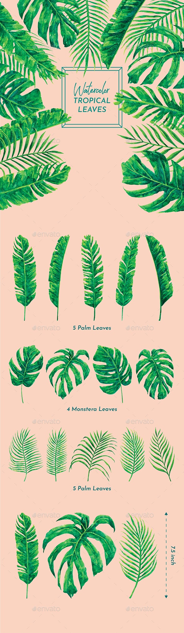 Watercolor Tropical Leaves - Objects Illustrations