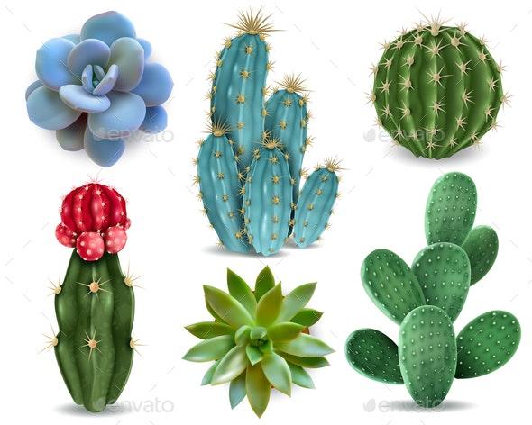 Cactus Succulent Realistic Set - Backgrounds Decorative