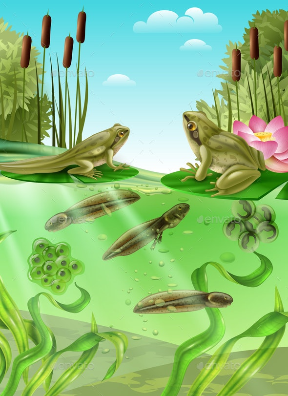 Frog Life Cycle Realistic Image - Flowers & Plants Nature