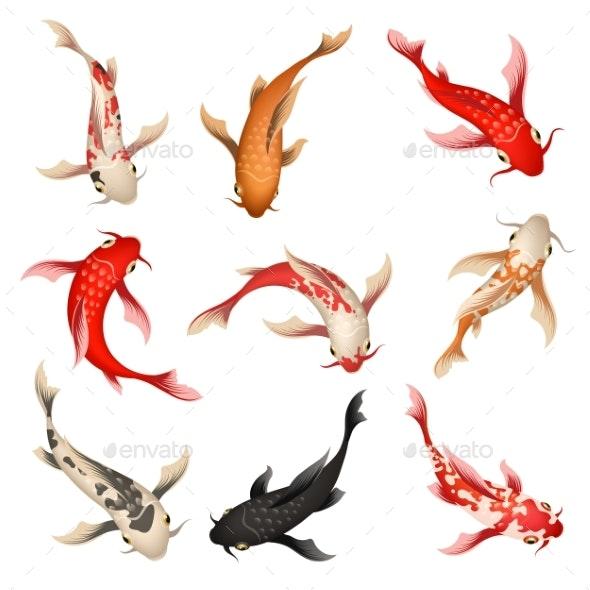 Koi Fish Set - Animals Characters