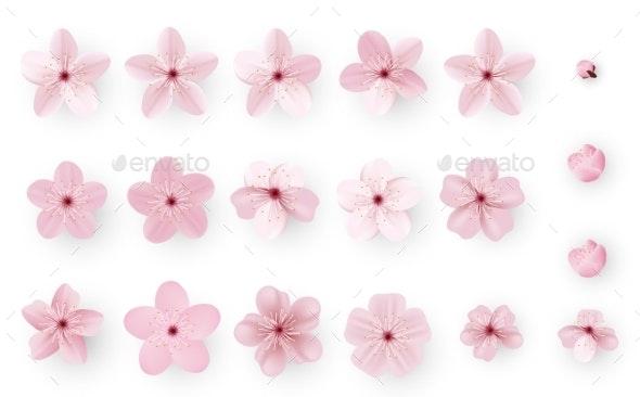 Realistic Sakura or Cherry Blossom - Flowers & Plants Nature