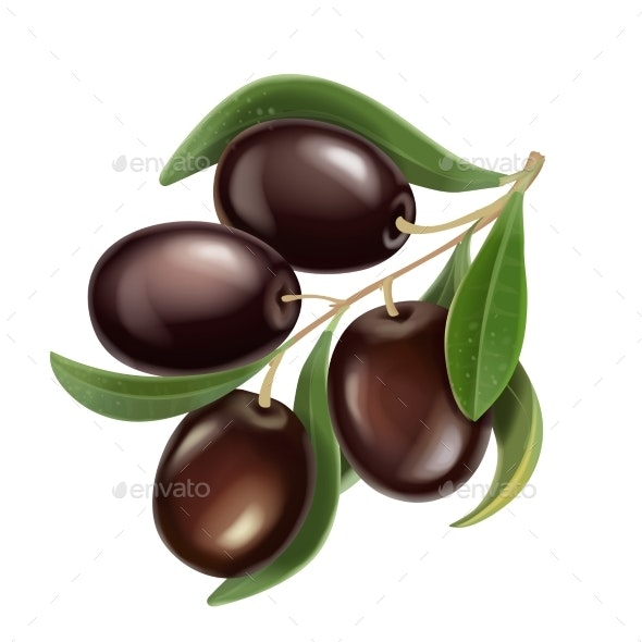 Black Olives Branch Realistic Illustration - Food Objects