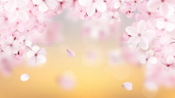 Blossoming Light Pink Sakura Flowers - Flowers & Plants Nature