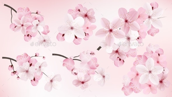 Blossoming Dark and Light Pink Sakura Flowers - Flowers & Plants Nature