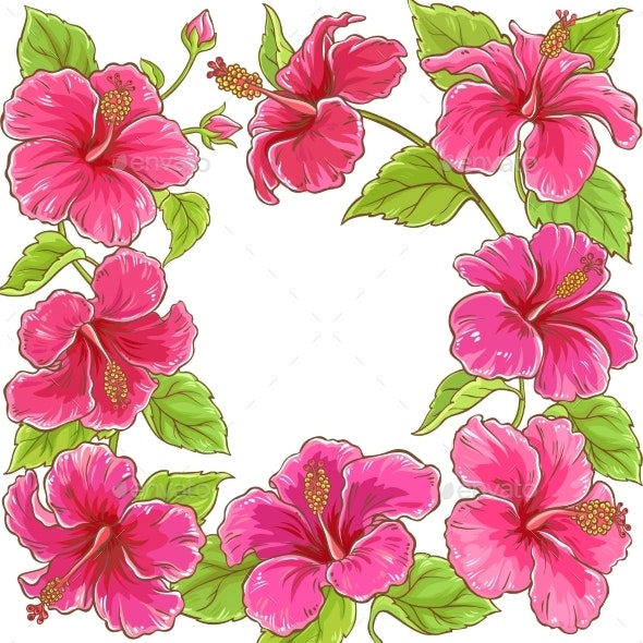 Hibiscus  Vector Frame - Flowers & Plants Nature