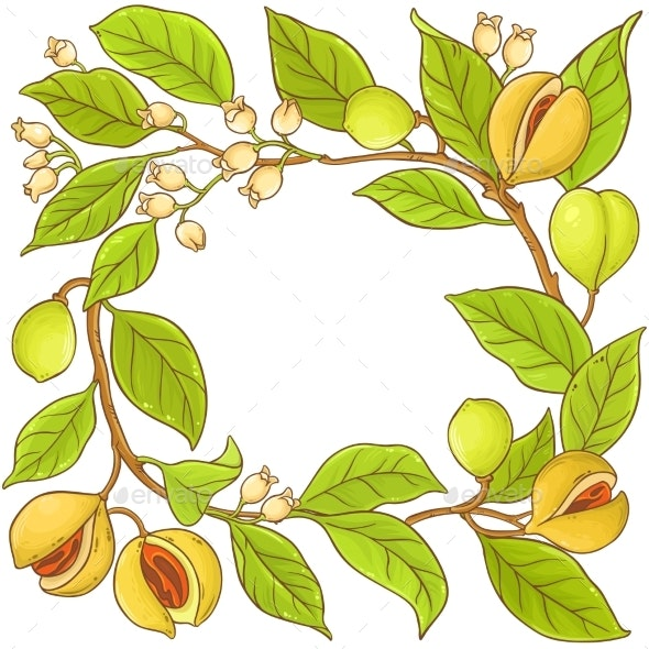 Nutmeg Branch Vector Frame - Food Objects