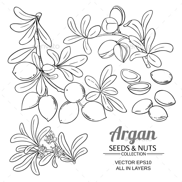Argan Branches Vector Set - Health/Medicine Conceptual