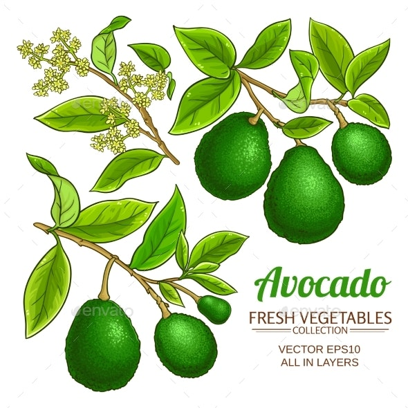 Avocado Vector Branches - Food Objects