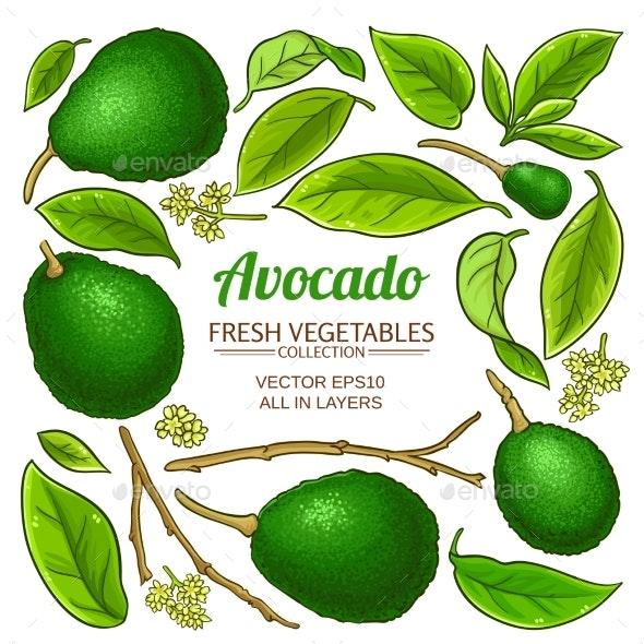 Avocado Vector Set - Food Objects