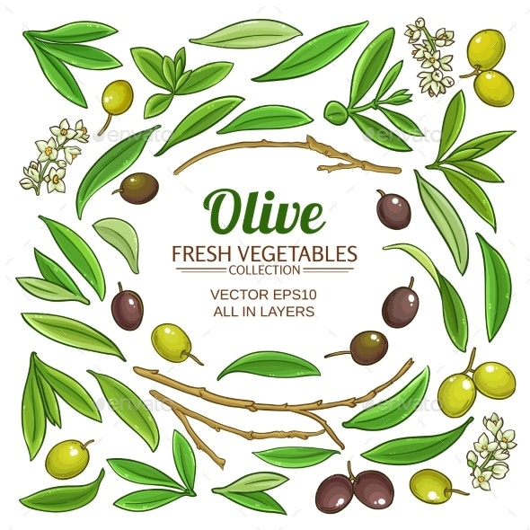 Olive Elements Vector Set - Food Objects