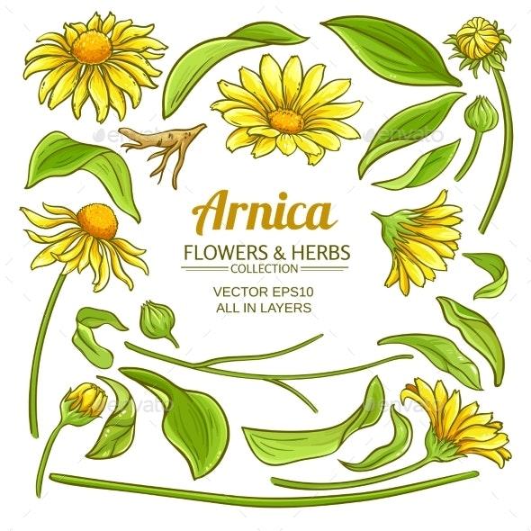 Arnica Elements Vector Set - Flowers & Plants Nature