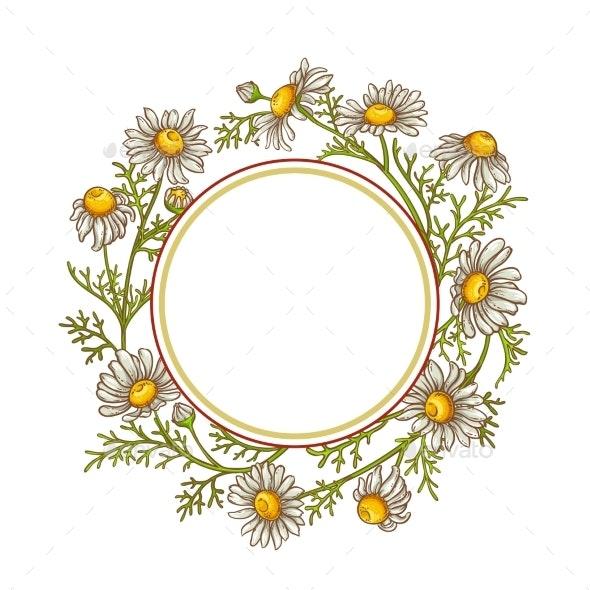 Chamomile Flower Vector Frame - Health/Medicine Conceptual