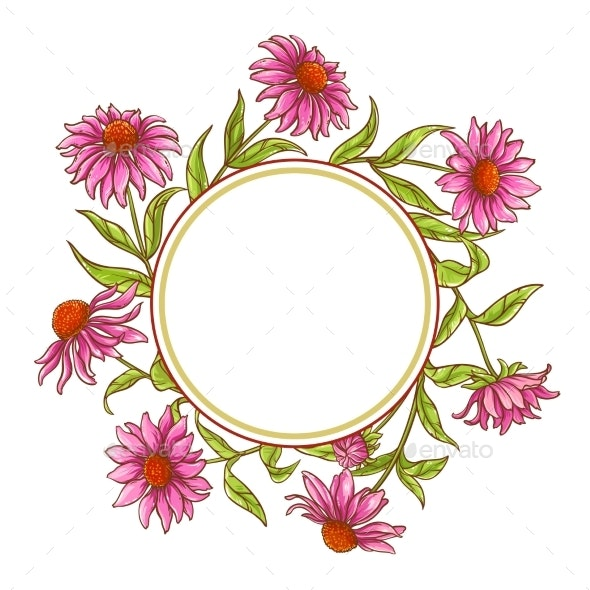 Echinace Purpurea Vector Frame - Flowers & Plants Nature