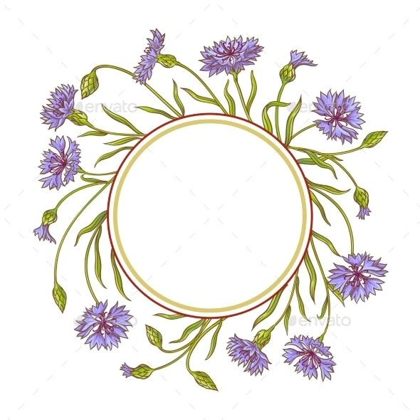 Cornflower Vector Frame - Flowers & Plants Nature