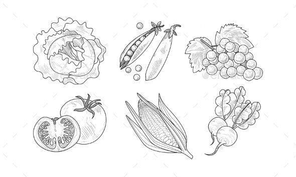 Vector Set of Fresh Vegetables and Fruits - Food Objects