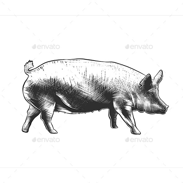 Hand Drawn Sketch of Pig - Animals Characters