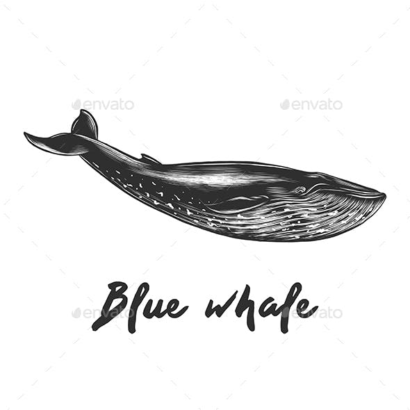 Sketch of Blue Whale