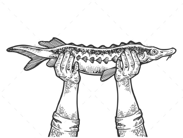 Hands with Fish Engraving Vector Illustration - Animals Characters